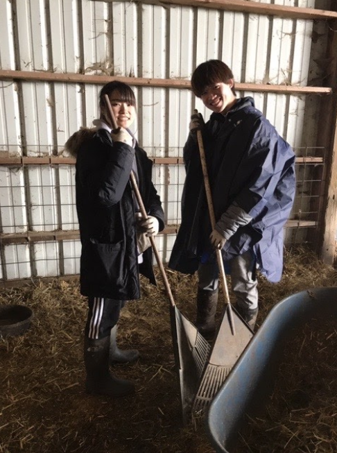 Rikuya and his friend posing for the camera, smiling while raking hay in a barn.