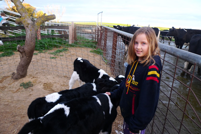 Young Sophia wearing an oversized jacket petting three baby black-and-white cows at a farm.